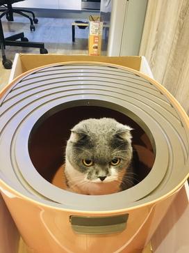 立桶式貓盆