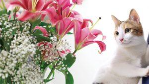 對貓有毒的15種常見居家植物 [百合.鬱金香.水仙對貓劇毒你知道嗎?!]