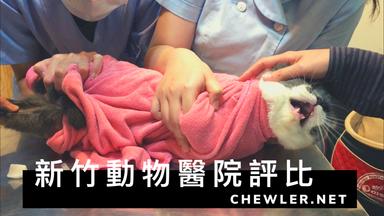 2020 新竹動物醫院評比與推薦 [貓咪豬樂與他媽的朋友就診分享]