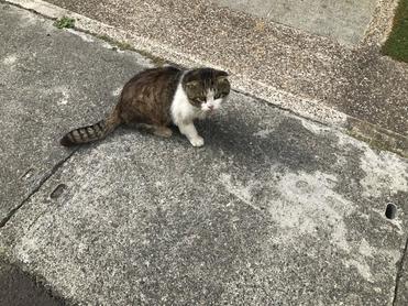 愛滋貓救援,新竹動物醫院