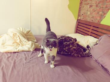 貓咪到台南民宿