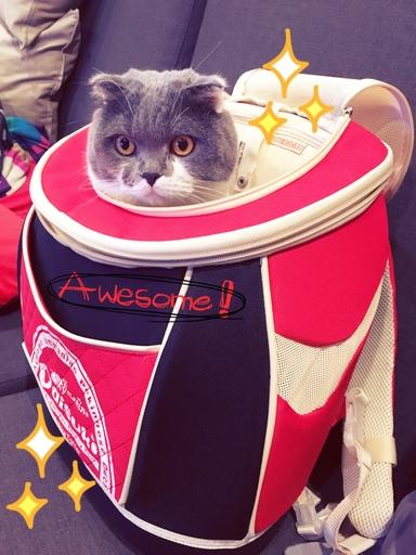 新手養貓必備用品外出包