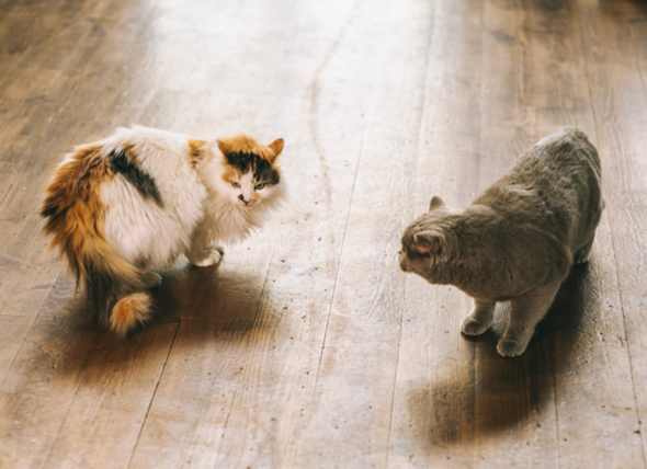 新舊貓相處