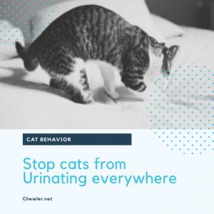 貓咪亂尿的原因與解決方式 [豬樂與貓奴朋友的實際案例分享]