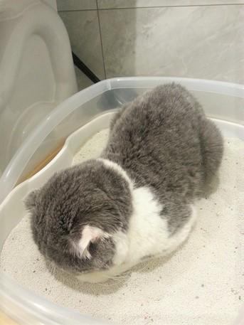 貓咪結紮完生理痛