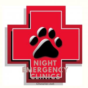24H動物醫院夜間急診名單[及時守護毛孩的緊急狀況]