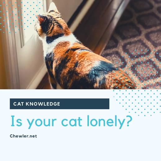 只養一隻貓,貓會不會寂寞? [多數案例分析,奴才千萬不要強求]