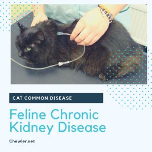 貓咪慢性腎臟病 [令貓奴聞風喪膽臨床就診率TOP1的腎衰]