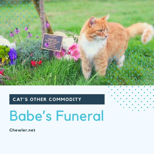 2021 北部六大寵物殯葬業者整理與推薦/寵物後事處理 [送寶貝的最後一哩路]