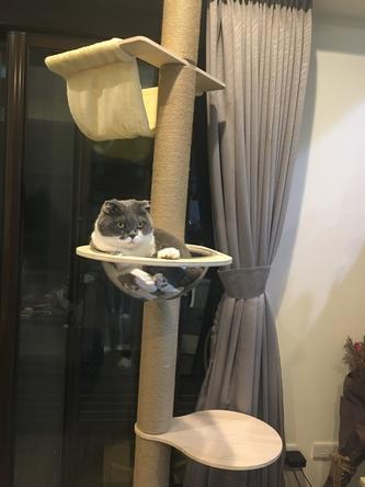 貓咪通天柱