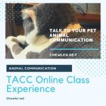 台灣動物溝通中心(台灣動物溝通關懷協會)動物溝通課程上課心得感想 [貓奴想跟寶貝對談想到瘋了]