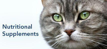 貓咪必備四大營養素 : 離胺酸、牛磺酸、益生菌、魚油 [ 你家寶貝需要補充的貓咪保健食品/貓咪營養品 ]