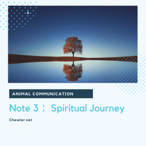 動物溝通課程筆記Note3 : 靈性圈的專有名詞探討,脈輪、松果體、能量