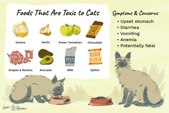 Toxic food cats can't eat