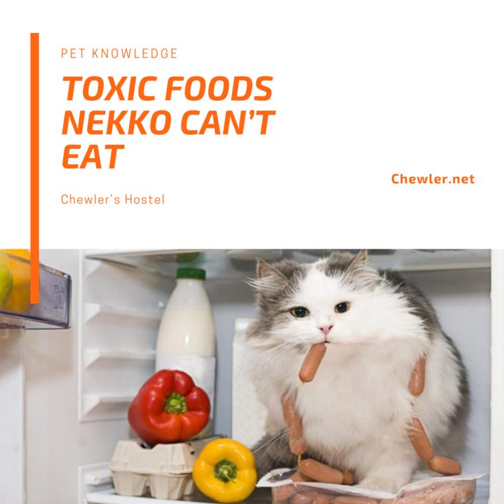 貓咪不能吃的常見食物 [貓咪拔麻不能大意,這些東西吃了會讓毛寶貝身陷險境! ]