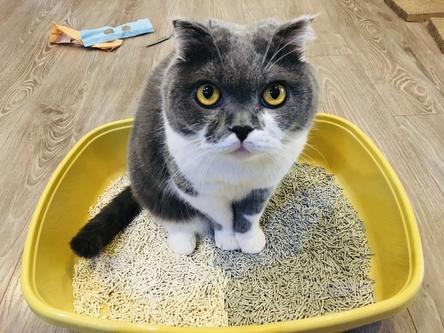 貓侍豆腐砂