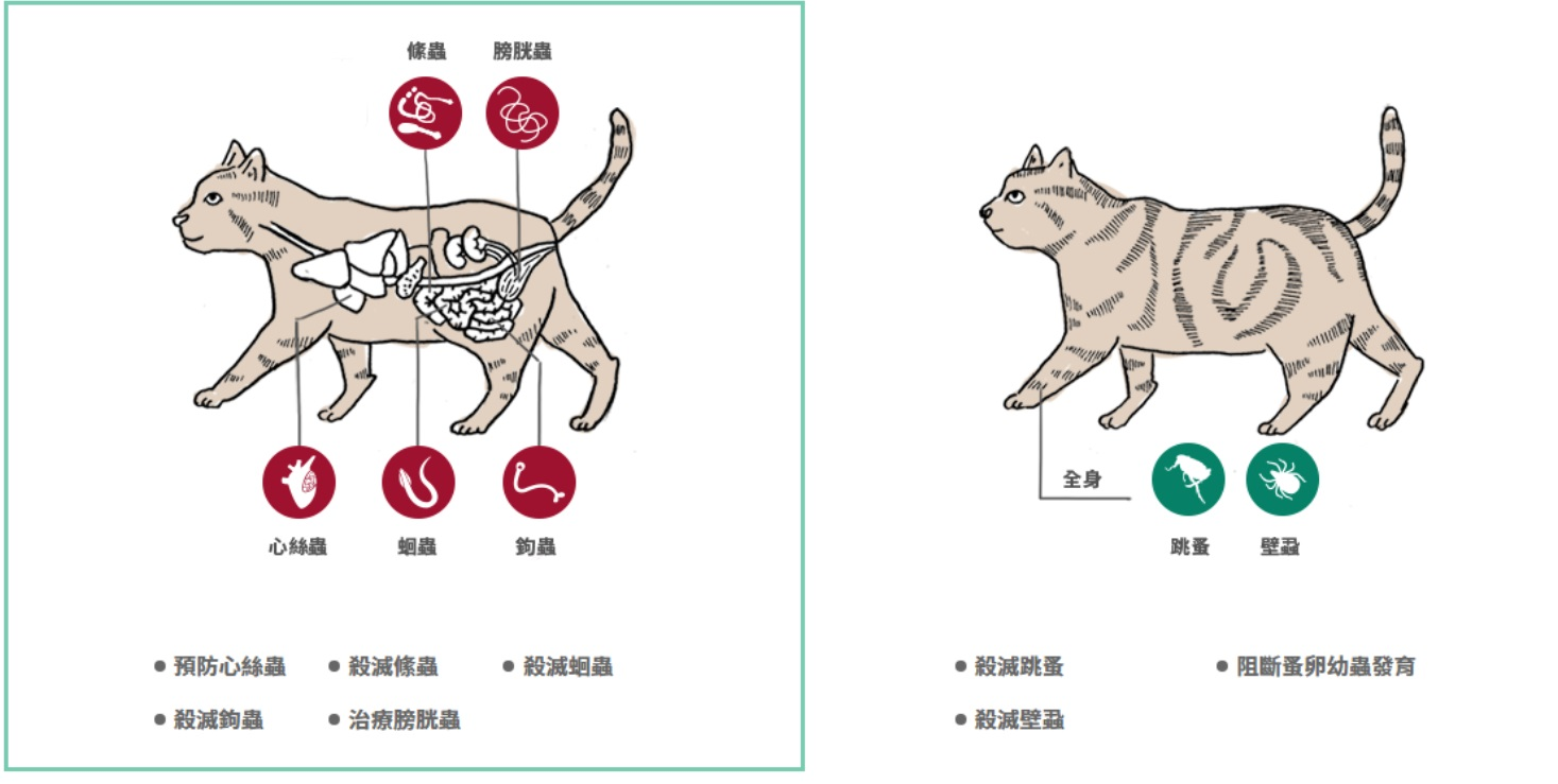 貓咪體內外的蟲