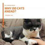 貓咪踏踏與貓咪呼嚕代表的意思是?貓咪到底有多愛你?